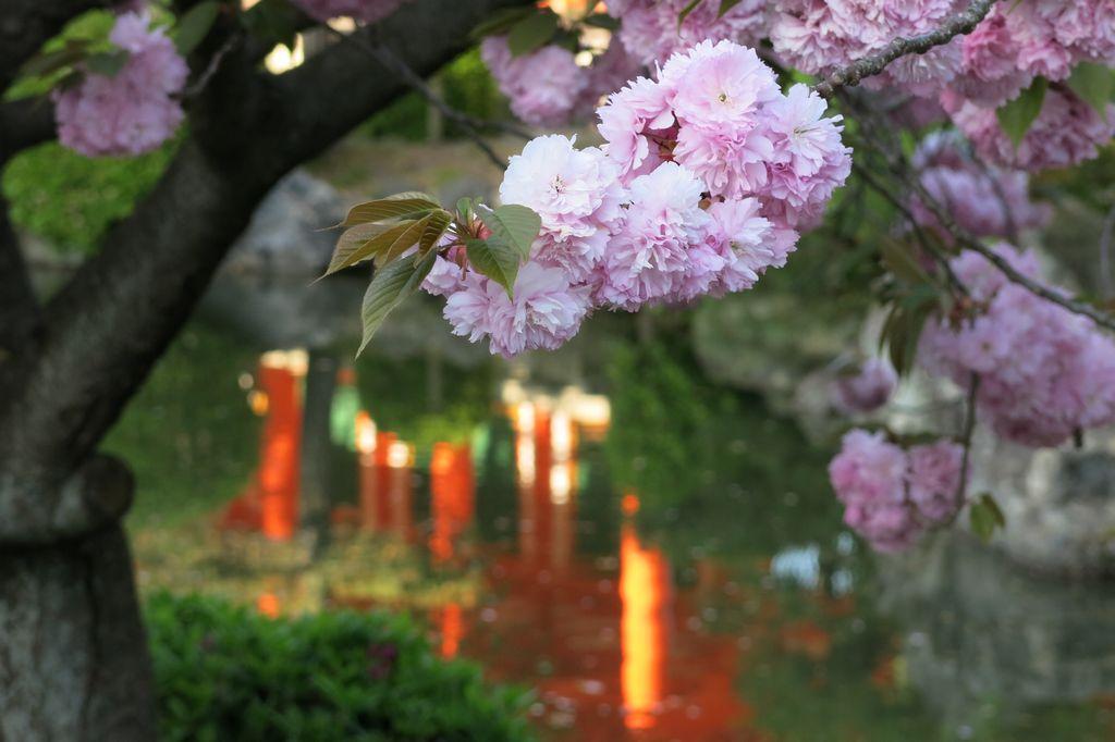Inspirations Japon
